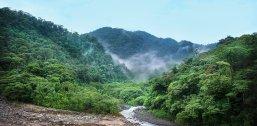 jungle-4003374_1280