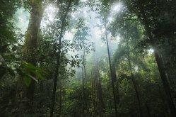 jungle-601542_1280