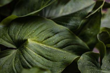 leaves-4012127__480