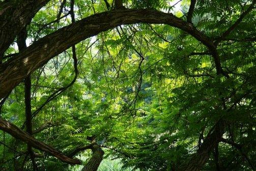 tree-141692__480